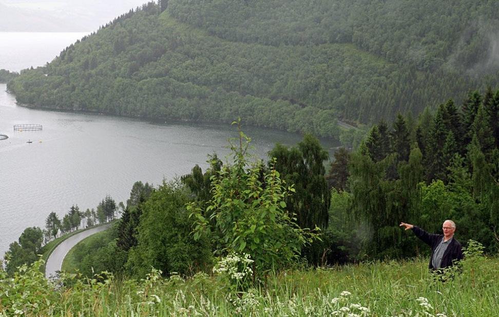 PARAGRAFRYTTERI? På toppen av denne bratte enga som stuper ned i Tingvollfjorden, vil Erling Hoem bygge sin kårbolig. En ung familie skal få overta en av de siste gårdene i drift i fraflyttingsbygda Hoem. Men Fylkesmannen er redd det vil føre til fragmentering av jordbruksland, og sier nei. Foto: Thomas Vermes / ABC Nyheter